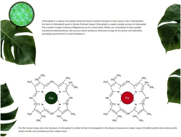 Unicity Chlorophyll 4